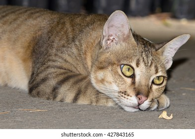 Tabby cat laying in concrete