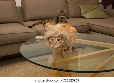 tabby cat with lion headdress in living room of house