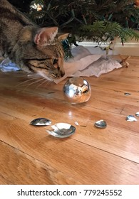 Tabby cat looking at broken christmas ornaments under the tree