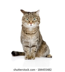 tabby cat looking at camera. isolated on white background