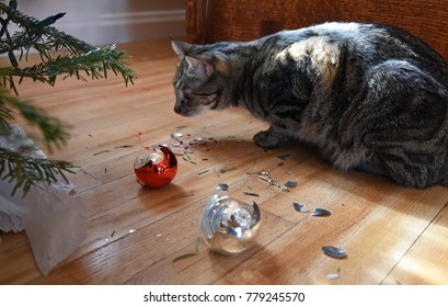 Tabby cat looking at christmas ornaments under the tree