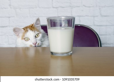 Tabby cat looking curious to a cup of milk.