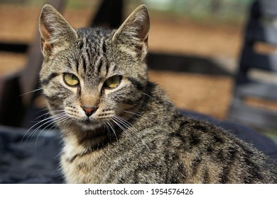 a tabby cat looks around attentively