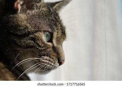 tabby cat looks out of the window with fly screen. feline stares through a insect screen