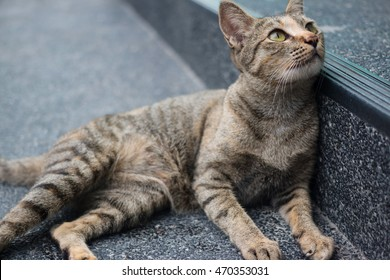 Tabby cat lying on the pavement