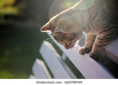 Tabby Cat on a Bench at Sunset