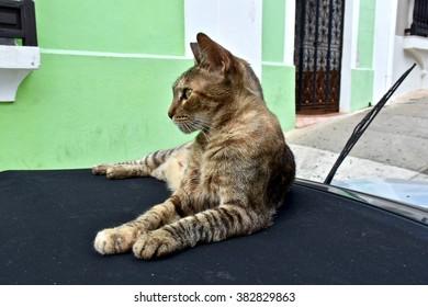 Tabby cat on a car