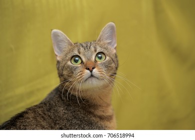 tabby cat on a green background