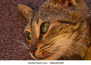 Tabby cat on outdoor garden background