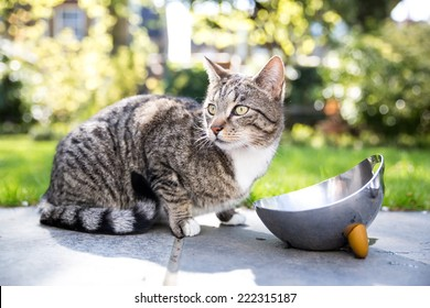 Tabby cat on a paved walkway in the garden crouching next to a stainless steel water bowl looking alertly to the side