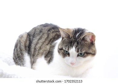 Tabby cat on white background