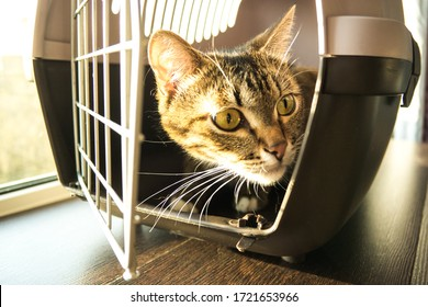 Tabby cat in a pet carrier. Tabby cat behind the bars. Pets on travel. Tabby cat on travel. Tabby cat in an animal shelter.