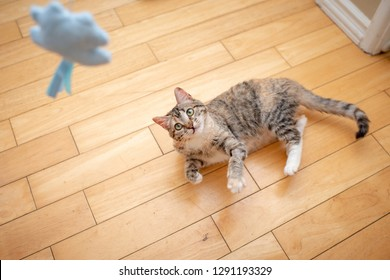 Tabby Cat Playing