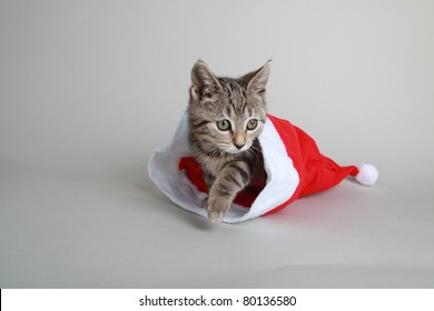tabby cat playing with christmas decoration