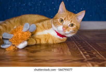 tabby cat plays with a toy