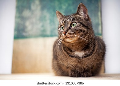 Tabby cat portrait.