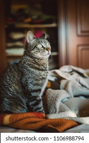Tabby cat portrait at home