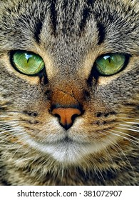 tabby cat potrait with green eyes