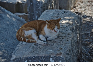 Tabby cat relaxing on a stone slab