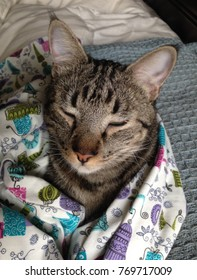 Tabby cat resting wrapped in a blanket with christmas motif
