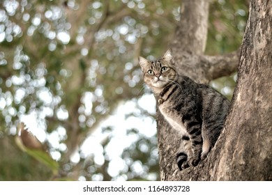 Tabby cat sit on tree and look forward with bokeh light background, copy space for text, domestic pet, pussycat with curious eyes
