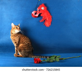 A tabby cat sits beside the flower and turns to look at the red theatrical mask