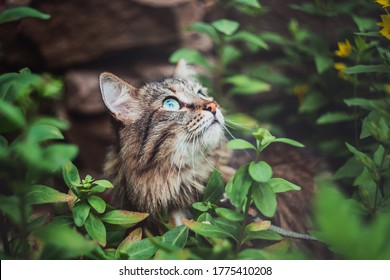 A tabby cat sits in the garden and looks up. Walking Pets in nature in the Park.