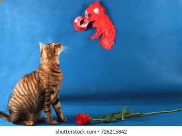 A tabby cat sits near a scarlet rose and looks at the red theatrical mask