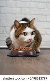 Tabby cat sitting beside a food bowl filled with dried food and looking sideways.