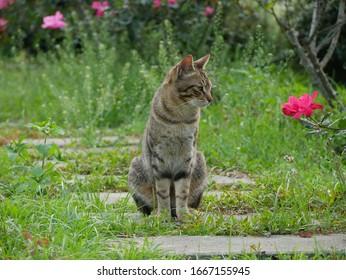 Tabby cat sitting in the garden.