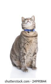 Tabby cat sitting and looknig up isolated on white