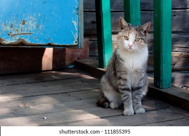 Tabby cat sitting near a cottage