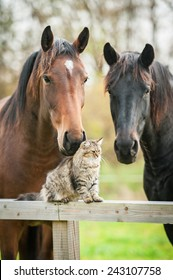 Tabby cat sitting on the fence near the horses