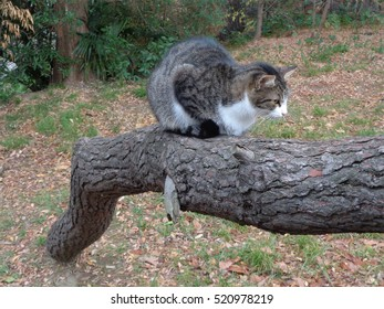 Tabby cat sitting on tree trunk