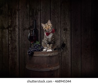 Tabby cat sitting on wine barrel with bottle, glass of red wine and red grapes