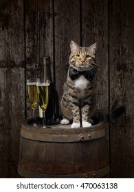 Tabby cat sitting on wine barrel with champagne bottle and glasses