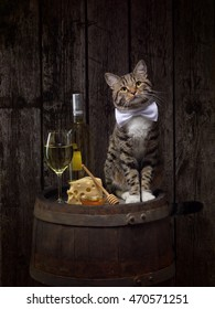 tabby cat sitting on wine barrel with white wine's bottle and glass with cheese and honey