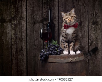 tabby cat sitting on wine barrel with red wine's bottle, glass and grapes
