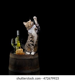Tabby cat sitting on wine barrel with white wine bottle, glass, cheese and honey on black background