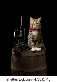 tabby cat sitting on wine barrel with red wine bottle, glass and grapes on black background