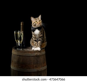 tabby cat sitting on wine barrel with champagne bottle and glass on black background