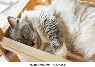 Tabby cat sleep in the wooden bed.