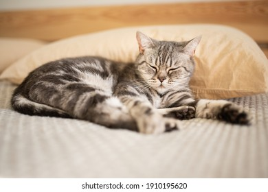 Tabby cat sleeping on the bed. Relaxation. Love for pets. Recreation - Shutterstock ID 1910195620