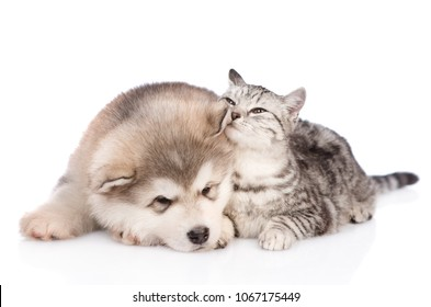 Tabby cat sniffs the dog's ear. isolated on white background