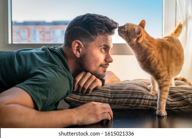 tabby cat sniffs the forehead of a young man in front of the window