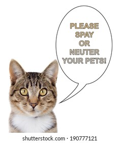 A tabby cat with a speech bubble saying, please spay or neuter your pets.  Isolated on a white background.