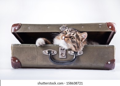 tabby cat. suitcase