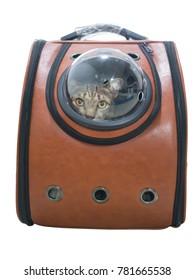 Tabby cat in traveler backpack  capsule isolated on white background