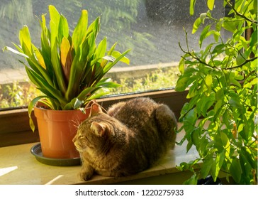 tabby chills in the sun on the windowsillIndoors