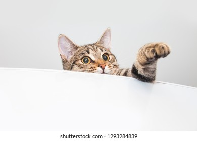 Tabby curious cat on the fridge. White background